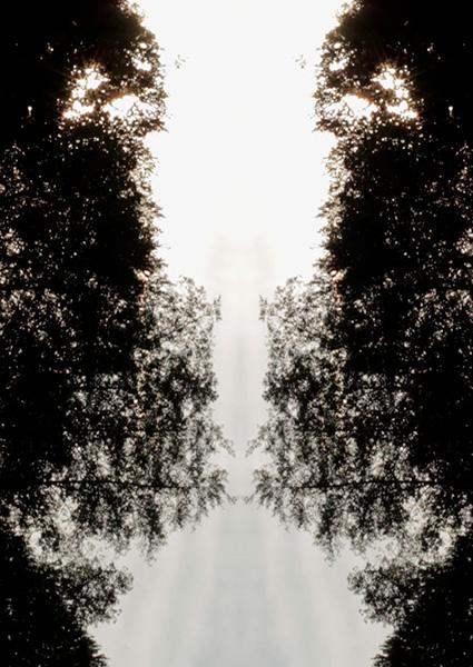 Imagen simétrica de árboles para el cartel solpor